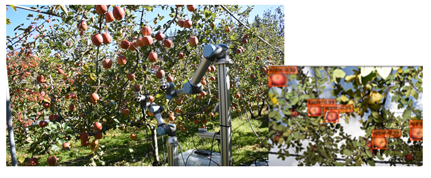 Autonomous Fruit Harvesting Robot 果実収穫ロボット 2アーム ディープラーニング デプスカメラ (RealSense)